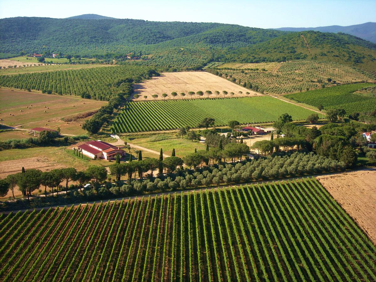 azienda-vitivinicola-mustiaio
