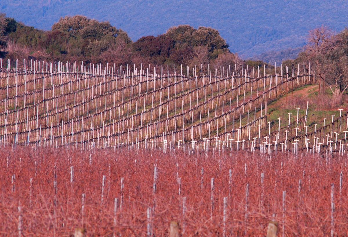 vineyards_autumn