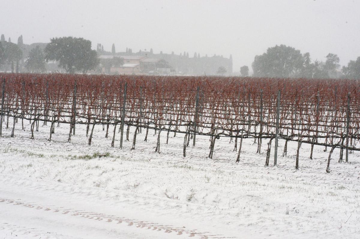 vineyards_winter